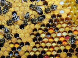 Friss méhpempő